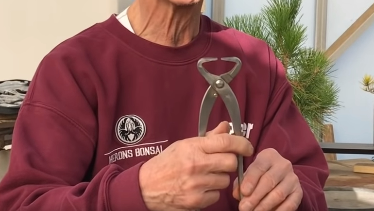 Peter holding Bonsai branch splitter