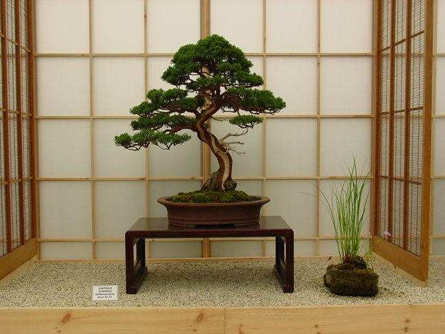 High Quality Specimen Bonsai Trees Herons Bonsai