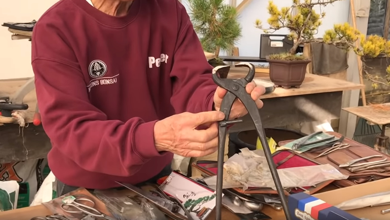 Peter holding large bonsai branch cutter