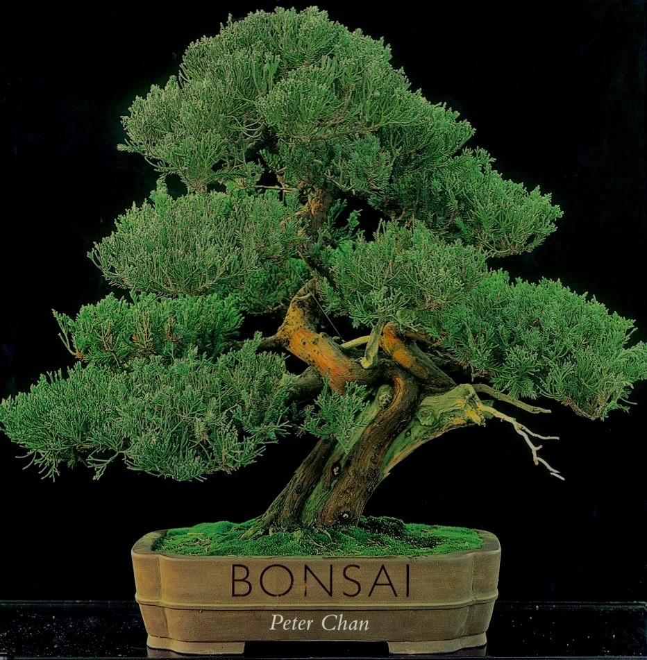 'Bonsai' By Peter Chan