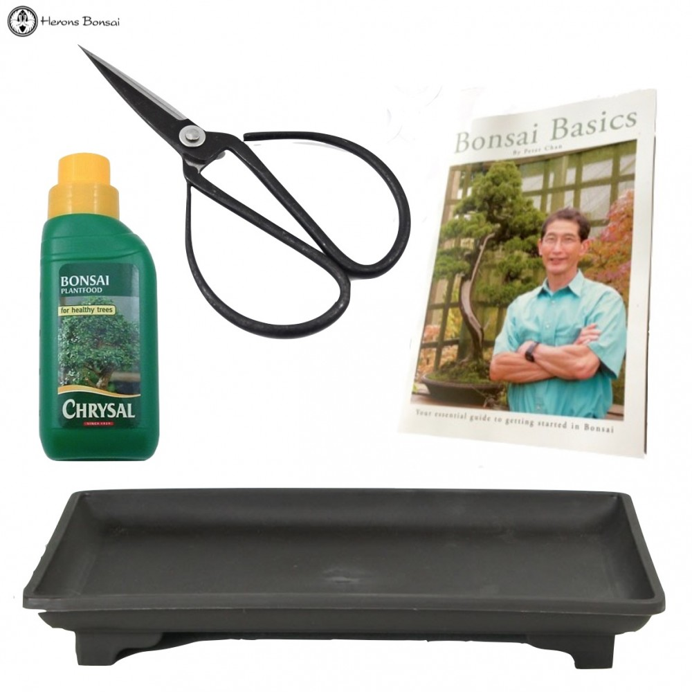 Indoor Bonsai Care Set Kit