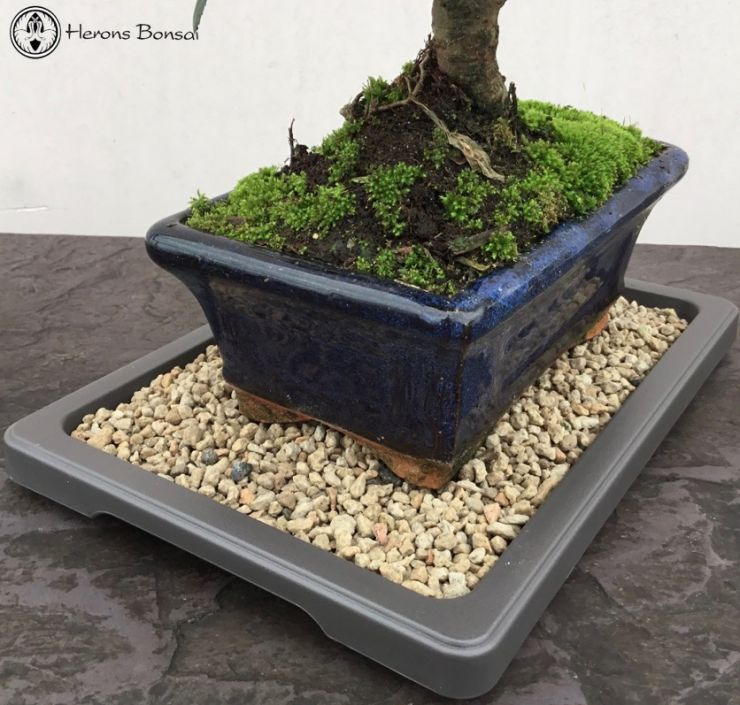 Undertray bonsai pebbles