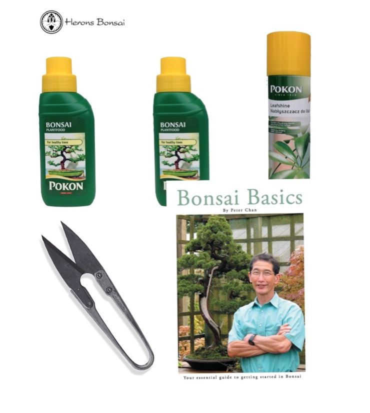 Indoor Feed Kit (2xFeed, snips, bonsai basics, leaf shine) | Herons Bonsai