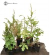Special Summer Bonsai Starter Tree Bundle | 1
