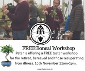 Free Bonsai Workshop for the Retired, Bereaved and Recuperating