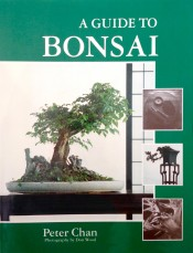Budget version of Bonsai Inspiration.