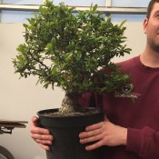 Creating Bonsai from Nursery stock workshop