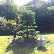niwaki | japanese garden tree pruning