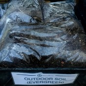 outdoor evergreen bonsai soil mix