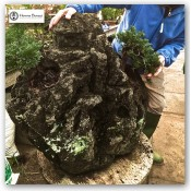 Making rock plantings with artificial rocks and Tufa