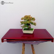 bonsai display stand
