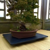 slate bonsai turning table | large herons bonsai