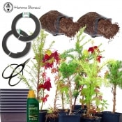 bonsai starter tree bundle | 10 trees