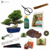 chinese juniper beginners bonsai gift pack