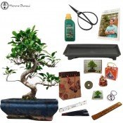 ficus beginners easy indoor bonsai gift pack sale | herons bonsai