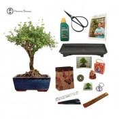 Serissa Indoor Beginners Bonsai Gift Pack