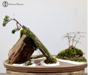 Juniper and Zelkova Penjing Landscape | COLLECTION ONLY | Herons Bonsai