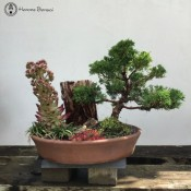 Chinese Juniper Landscape with Carved Wood & Succulents | COLLECTION ONLY