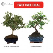 Two Tree Deal | Special Offer