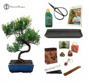 Brush Cherry beginners bonsai gift pack herons bonsai