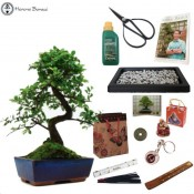 chinese elm beginners bonsai gift pack sale free uk delivery herons bonsai