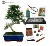 pepper beginners bonsai gift pack sale free uk delivery herons bonsai
