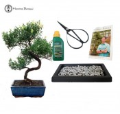 Brush Cherry beginners bonsai gift set