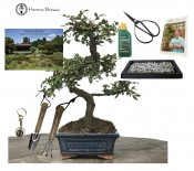 CHINESE ELM BUNDLE