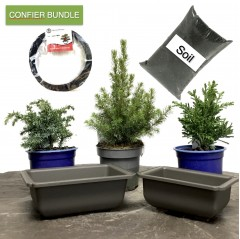 Conifer Bundle | 3 Trees