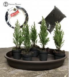 DIY Conifer Forest Bonsai