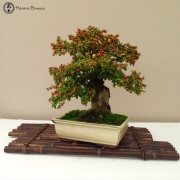 › Bonsai Turntables & Display Stands