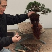 Bonsai Workshops for Beginners