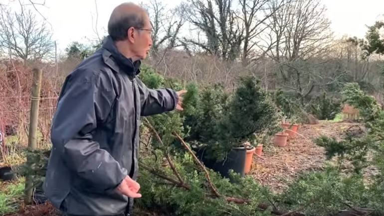 peter stood with maple and yew bonsai trees