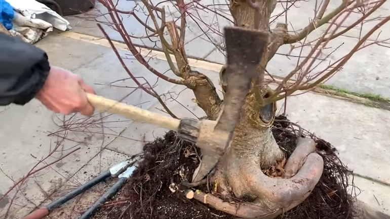 using pickaxe on tree roots