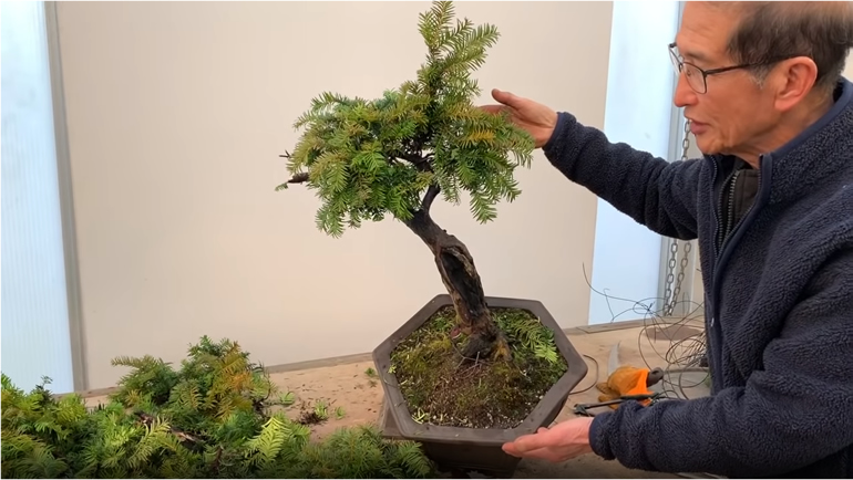wiring bonsai tree