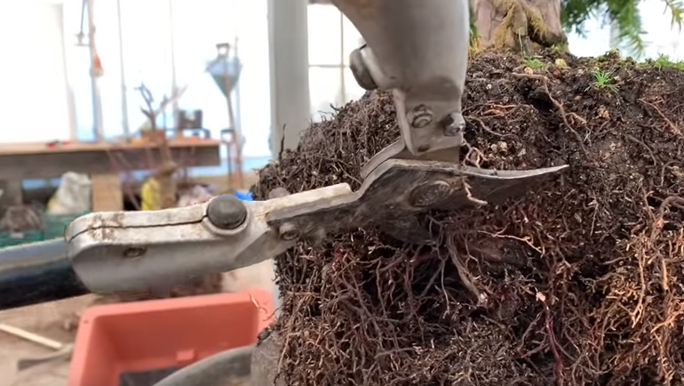 bonsai root cutting