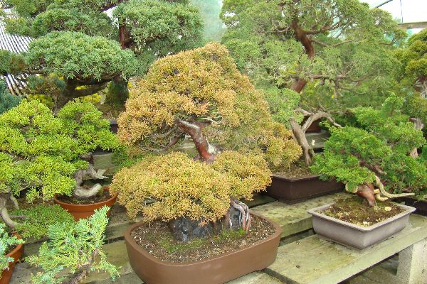 Herons Bonsai Nursery Near Lingfield Hints And Tips